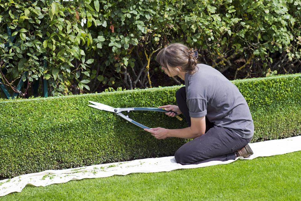 Quels critères prendre en compte pour choisir un jardinier ?
