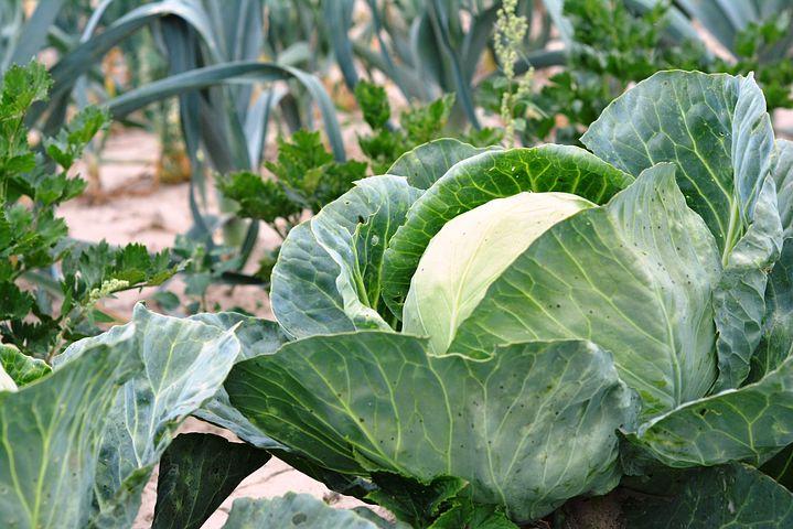 Tout savoir sur le broyeur de végétaux
