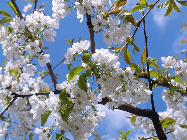 Quel est l'impact du jardinage sur l'environnement ?