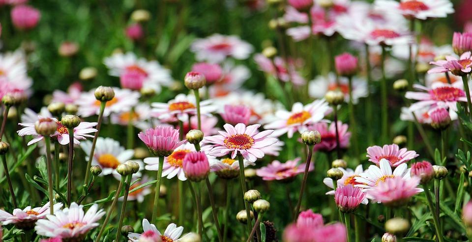 Combien coute les graines de fleurs pour un jardin ?