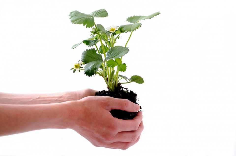 Faut-il des compétences préalables pour faire du jardinage ?